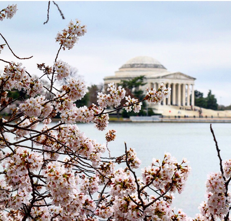 Green Gables State of Mind Jefferson Memorial